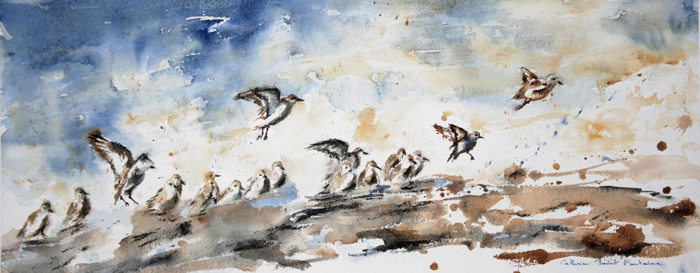 catherinesaintfontaine - les oiseaux du bord de mer